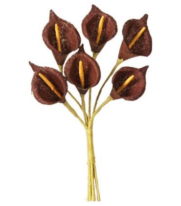 Arum chocolat