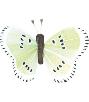 Papillon petit